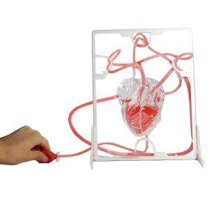 จำลองหัวใจ-STEM Education