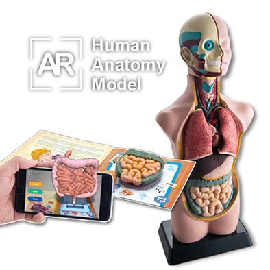 โมเดลร่างกายมนุษย์, AR